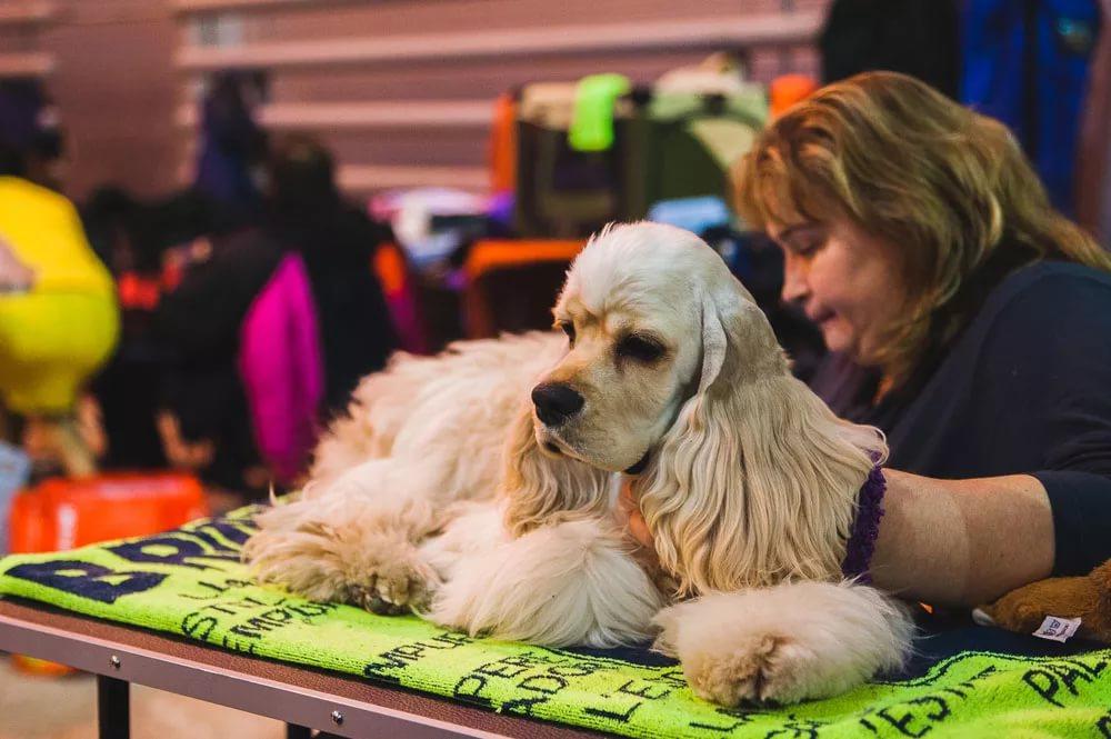 Выставки собак в Москве